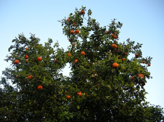 OrangeTop